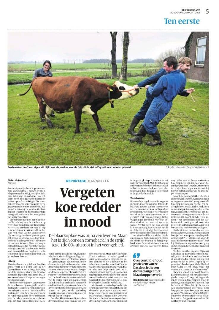 Vergeten koe redder in nood