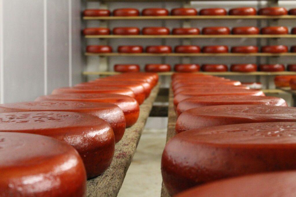 BoerenLeidse kaas van blaarkopmelk gemaakt op de Sophiahoeve